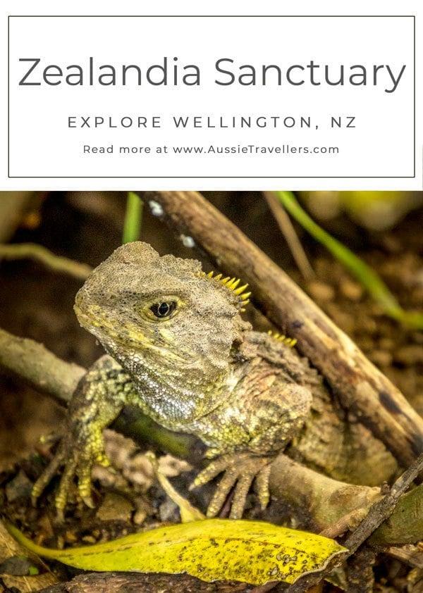 Zealandia Sanctuary Tui