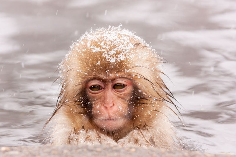 Baby monkey in Nagano