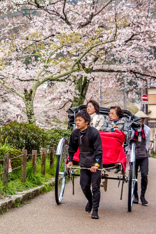 Philosophers Path in Kyoto with a hand drawn rickshaw beneath the cherry blossoms in spring