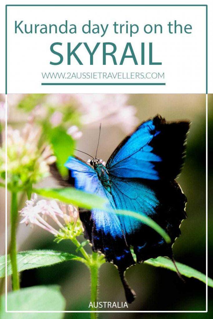 Blue butterfly in Kuranda