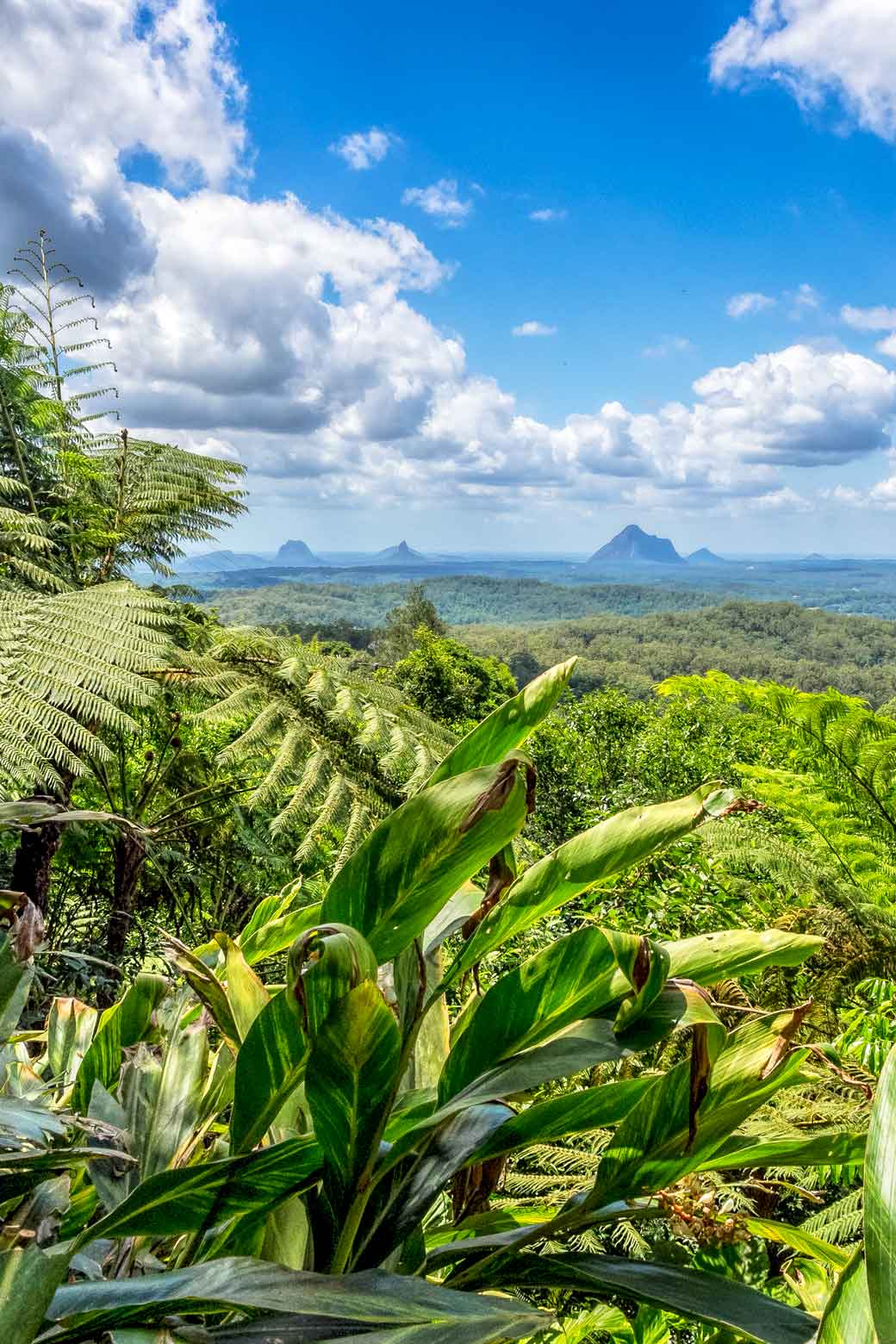 View from Maleny botanic garden out to the Glasshouse Mountains