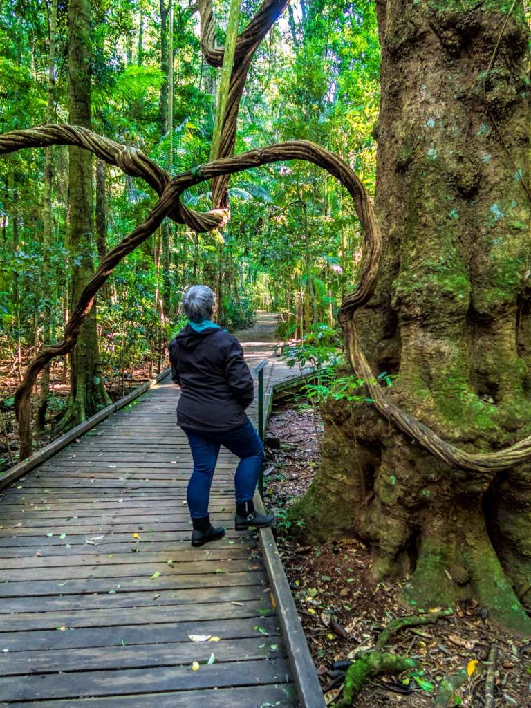 Toni at strangler fig on Mary Cairncross boardwalk