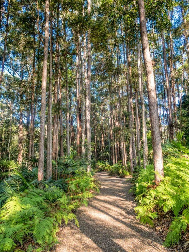 Fern lined walkway at Maroochy botanic gardens