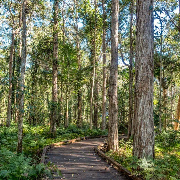 Fairy Wren walk at indigiscapes, Brisbane