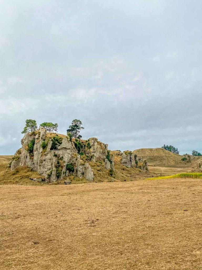 Waikato scenery