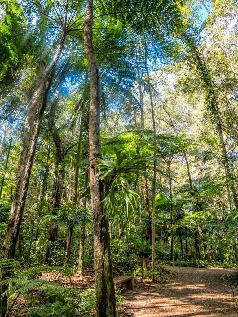 Fern glades at Maroochy botanic garden
