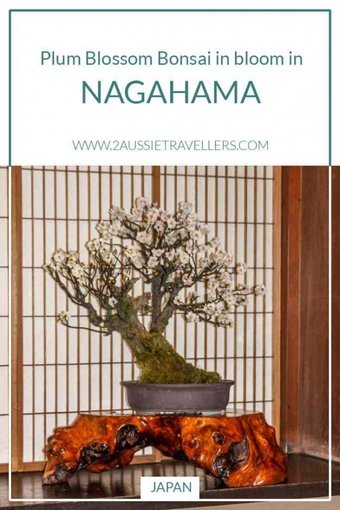 Nagahama bonbai exhibition pinterest poster