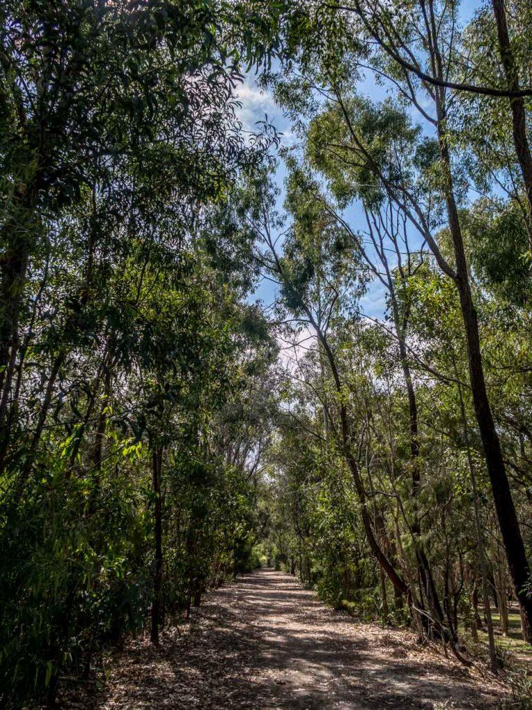 tree shaded path at Crystal Waters Park