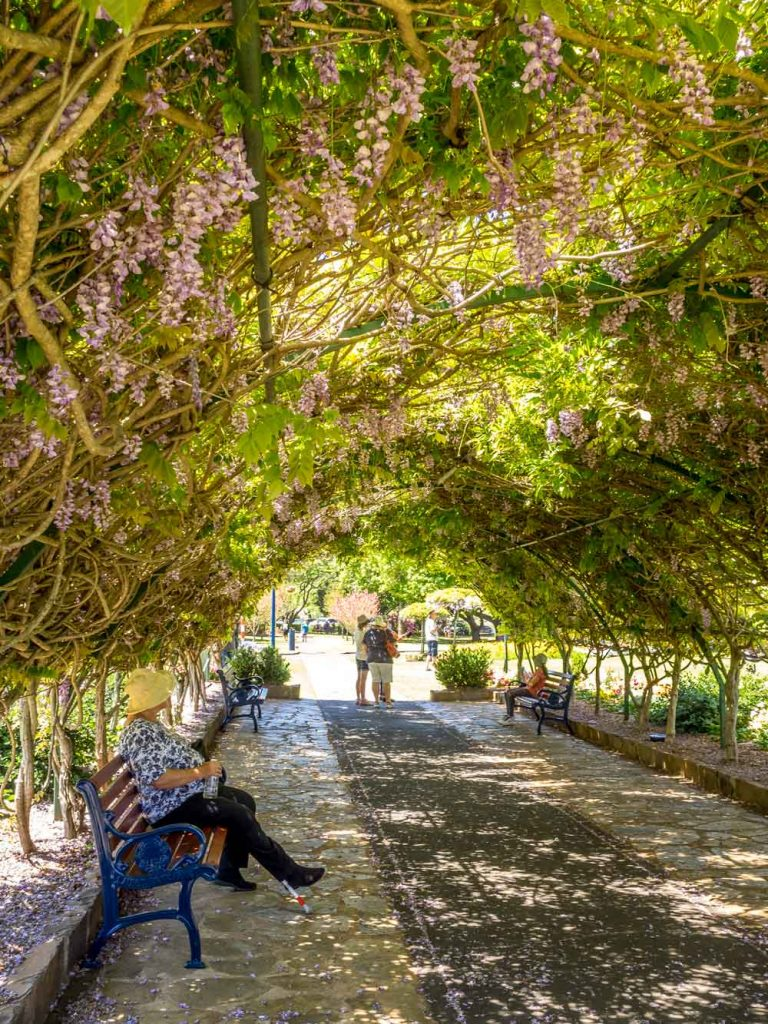 Wisteria tunnel in Laurel Bank Park, Toowoomba
