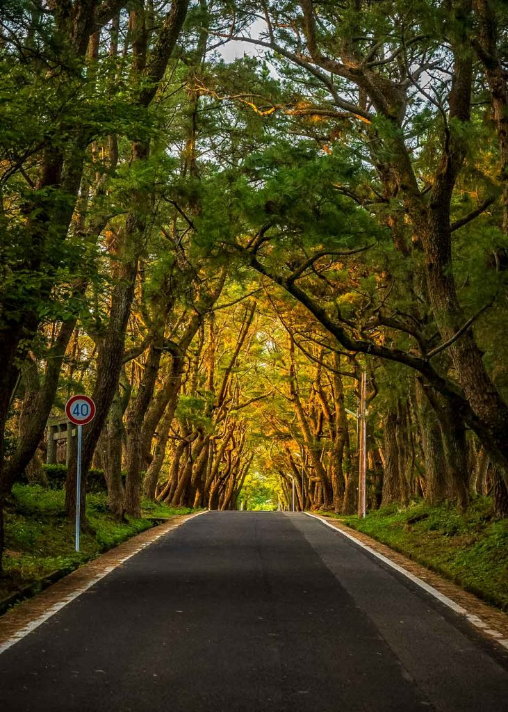 Road on Ojita Island