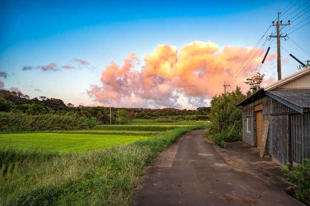 Path beside rice paddy