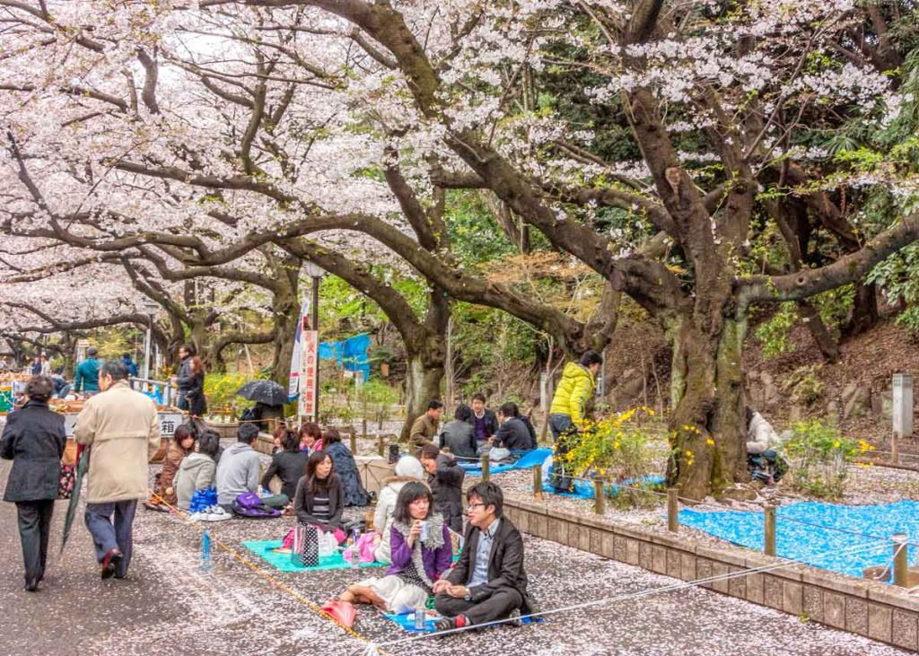 Hanami parties and dates in Ueno Park, Tokyo