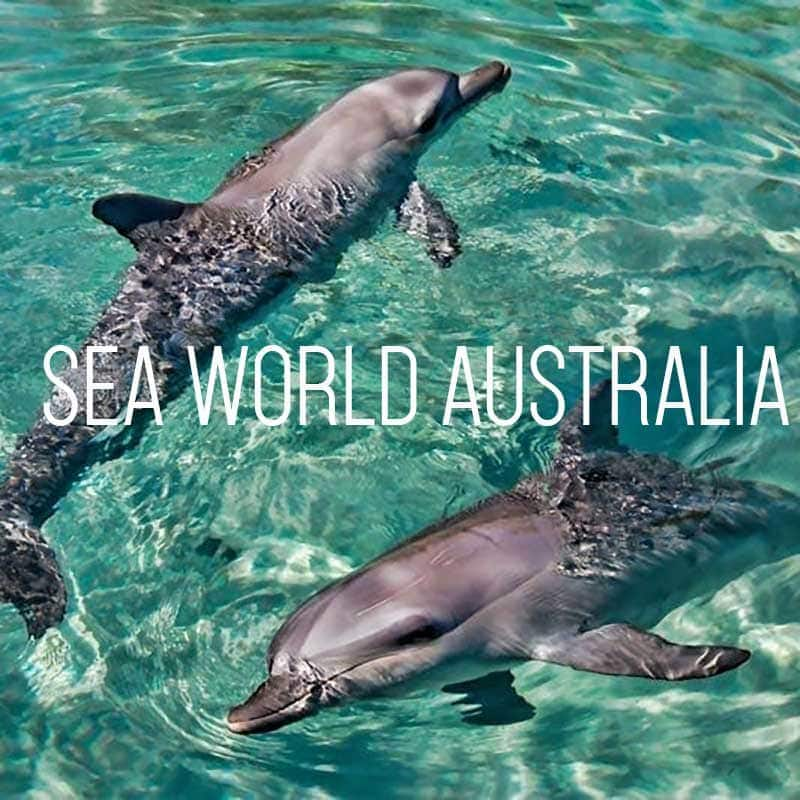 Sea World Australia cover