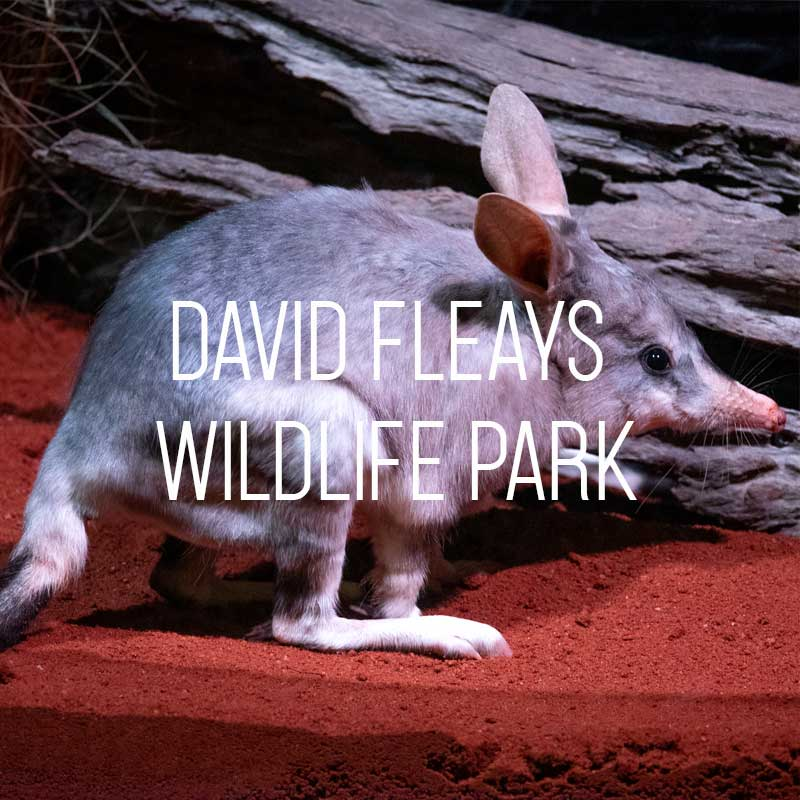David Fleays Wildlife Park cover