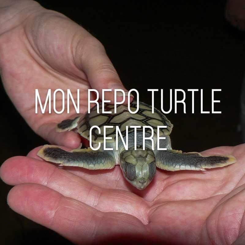 Mon Repo Turtle Centre cover