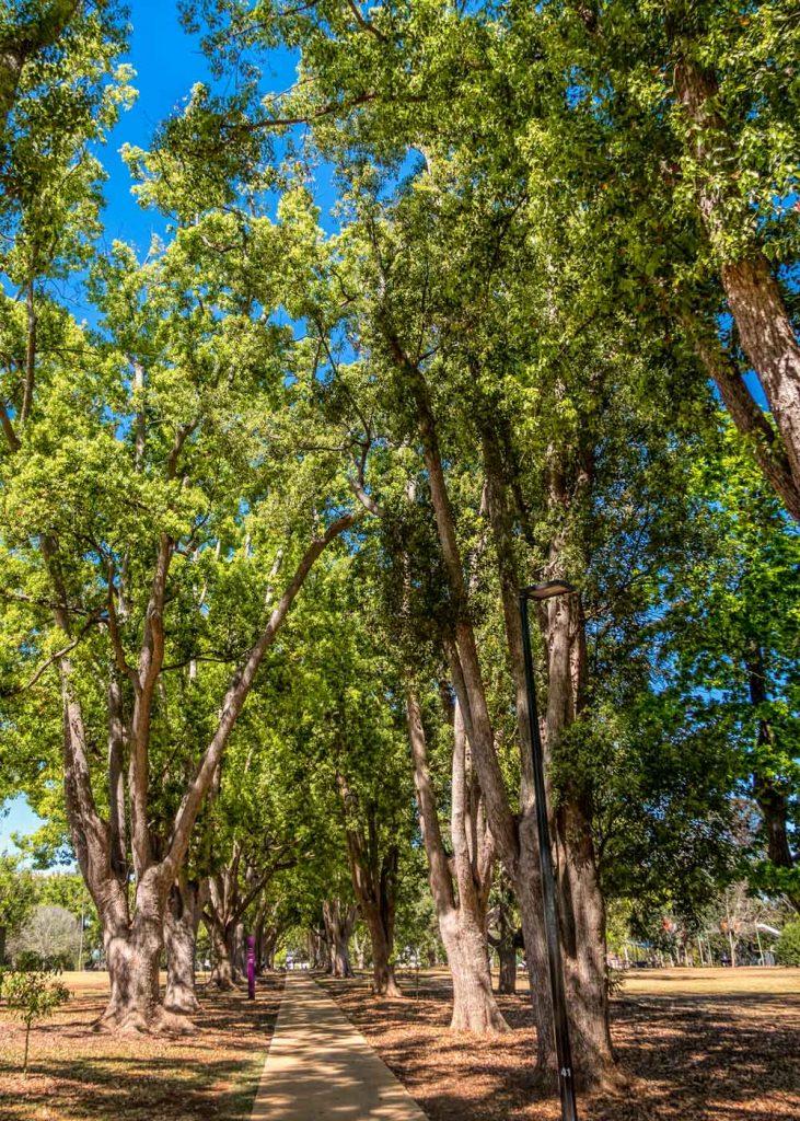 Queens Park avenue of trees