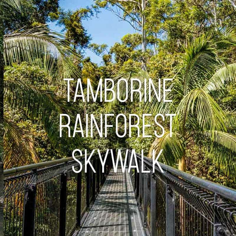 Tamborine Rainforest Skywalk cover