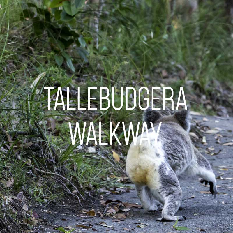 Tallebudgera Creek Walk