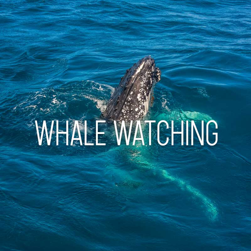 Whale watching cover