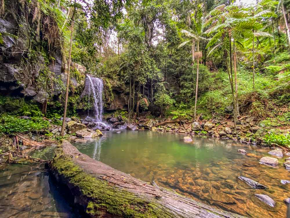 Curtis Falls in Tamborine Mountain