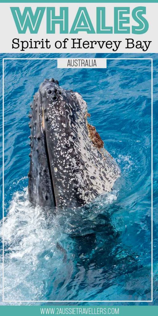 Whale cruise with the Spirit of Hervey Bay