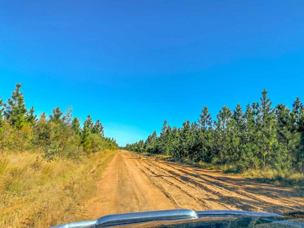 Camino en el bosque estatal de Wongi
